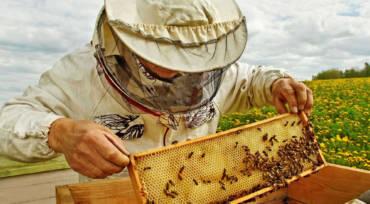 La cire d'abeille